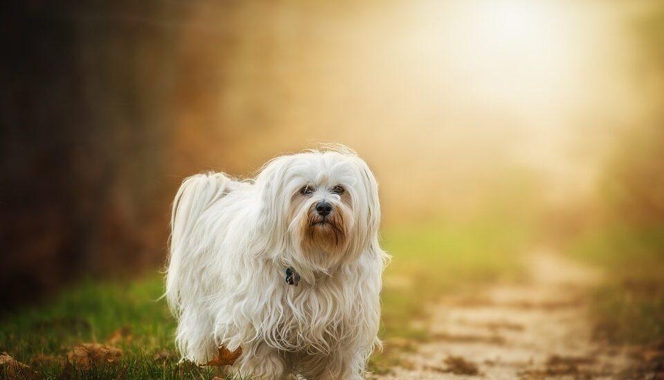Dog, Pet Insurance